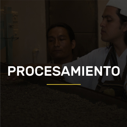 procesamiento-new-over
