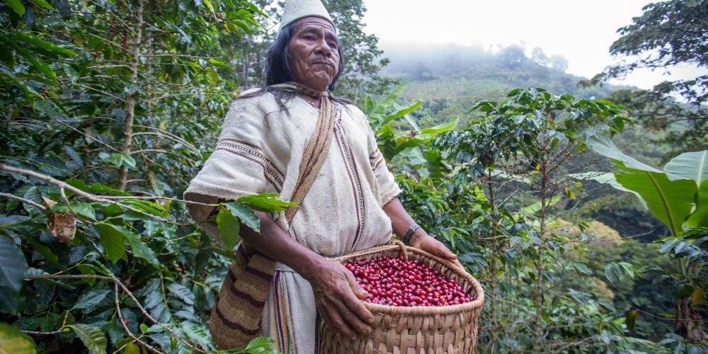Organic coffee (18)