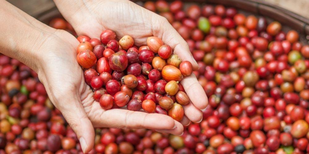 Origins coffee (19)