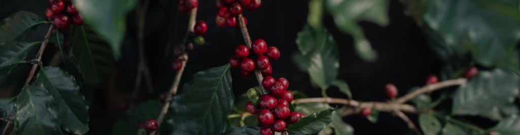 Origins coffee