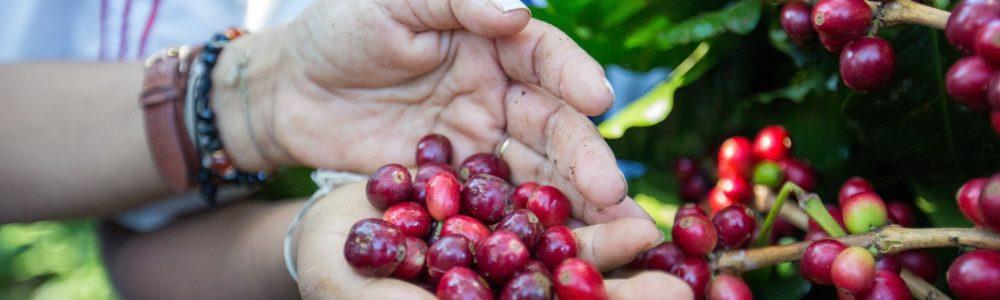 Coffee beans Bloque de Color Foto Perro Servicio de Cuidado Artículos Mascotas Alimentos Vídeo Portada de Facebook