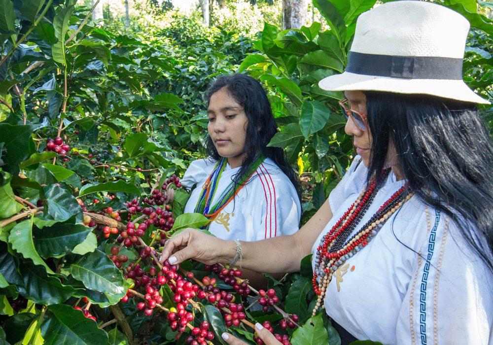 Organic Coffee 1